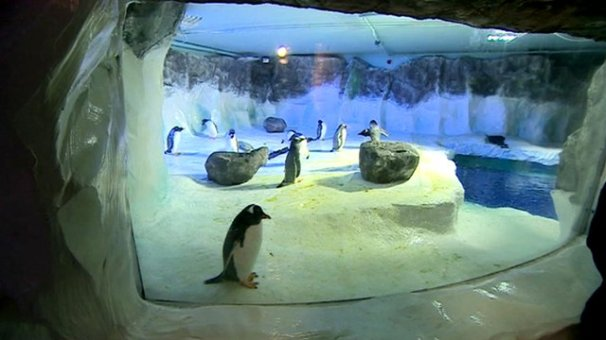 Birmingham Ice Adventure Penguins