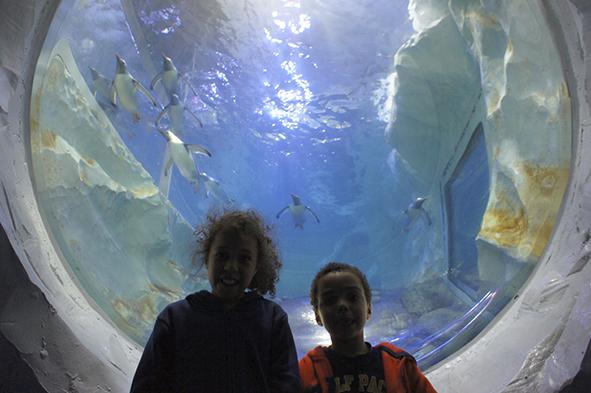 Birmingham Ice Adventure