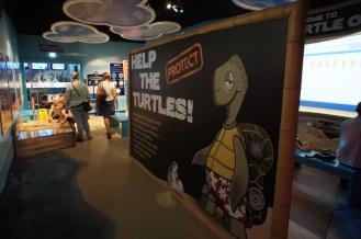 SLC Manchester Help The Turtles Interpretation