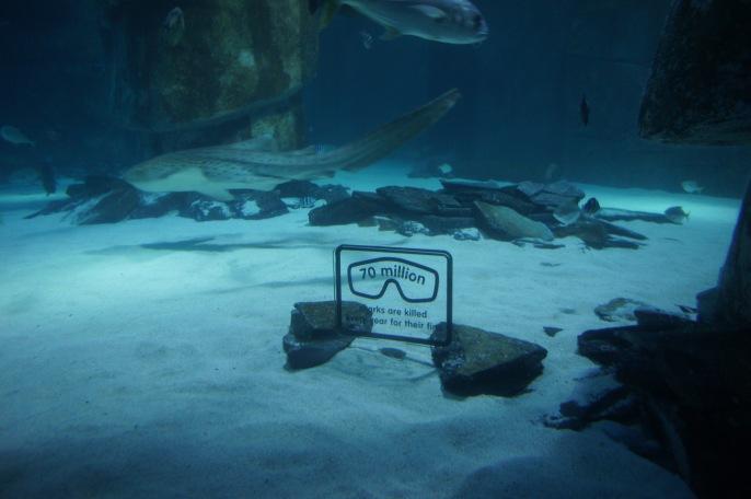 Sea Life London BRP Interactives Prototype SC