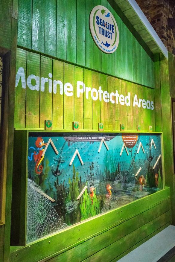 Conservation Cove opens at Brighton Sea Life Centre photo ©Julia Claxton- graphics fifty50