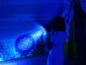 UV torch interactive